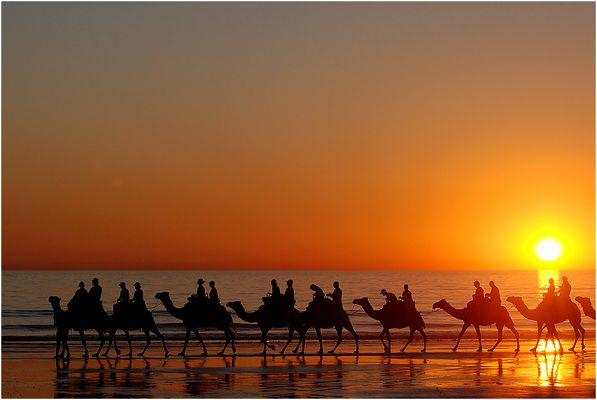 camel sunset III
