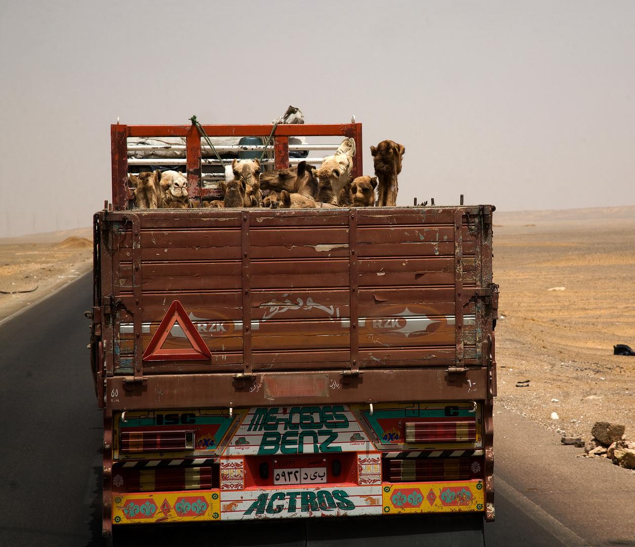 Camel-Truck