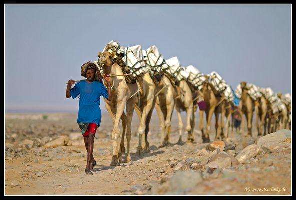 Camels on tour (Part II)