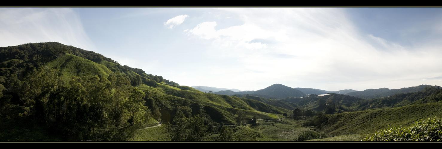 Cameron Highlands I