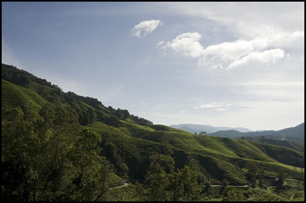 Cameron Highlands II