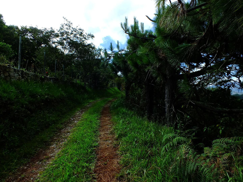 camino a casa