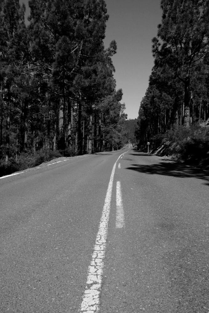 Camino al pinar 2