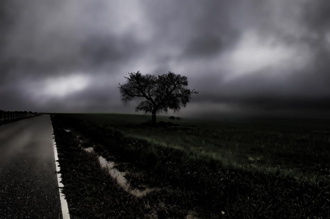 Camino con arbol