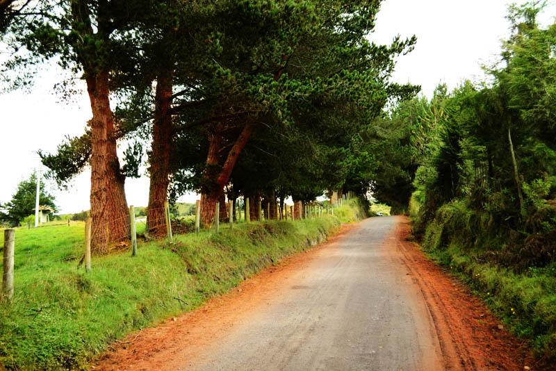 Camino natural