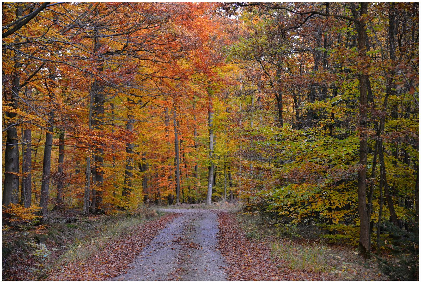 Camino por el bosque otoñal (Weg durch den herbstlichen Wald)