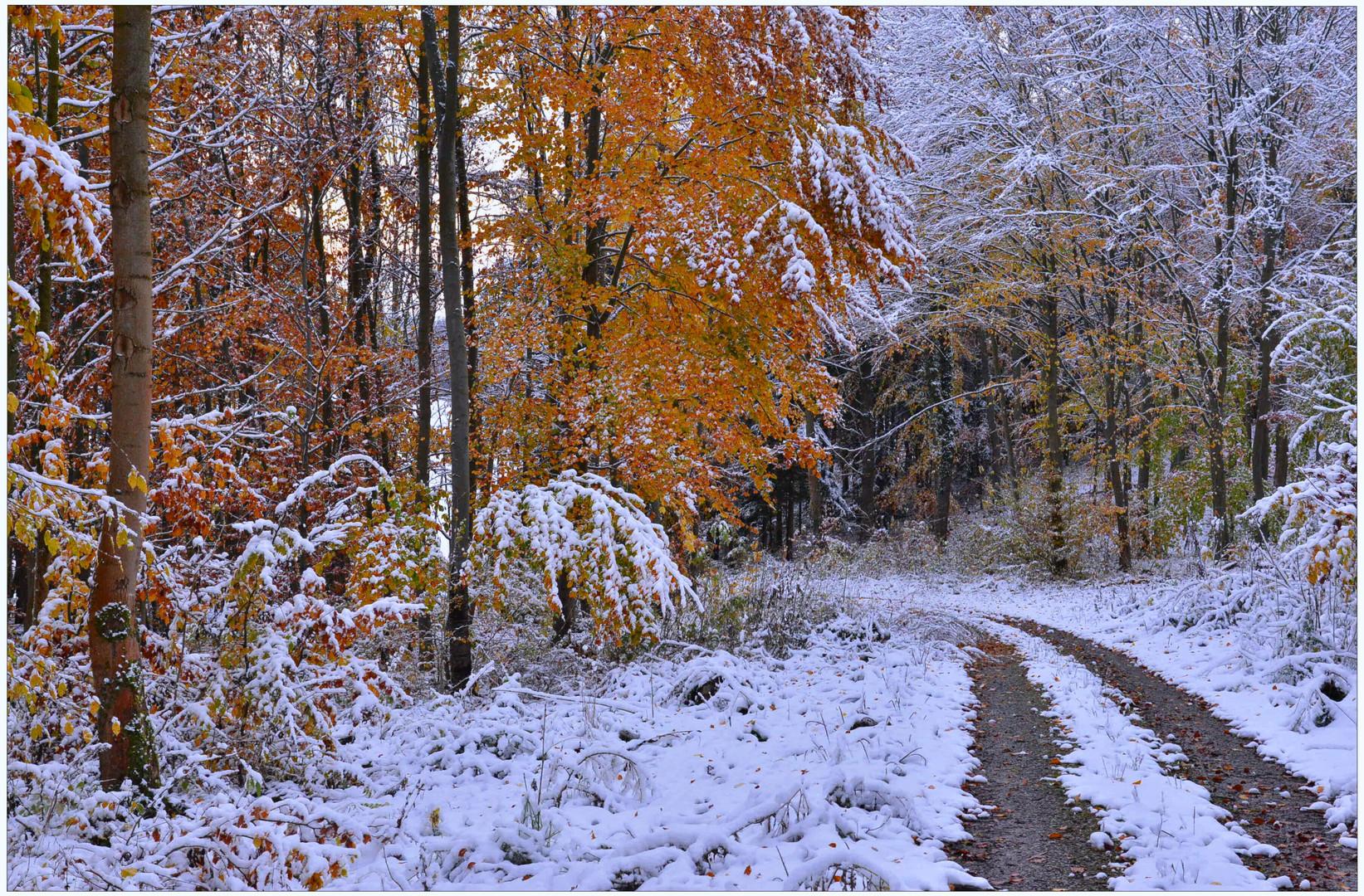 Camino por el bosque (Waldweg)