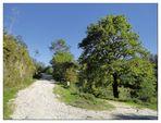 Camino Portugues 2011 (14)