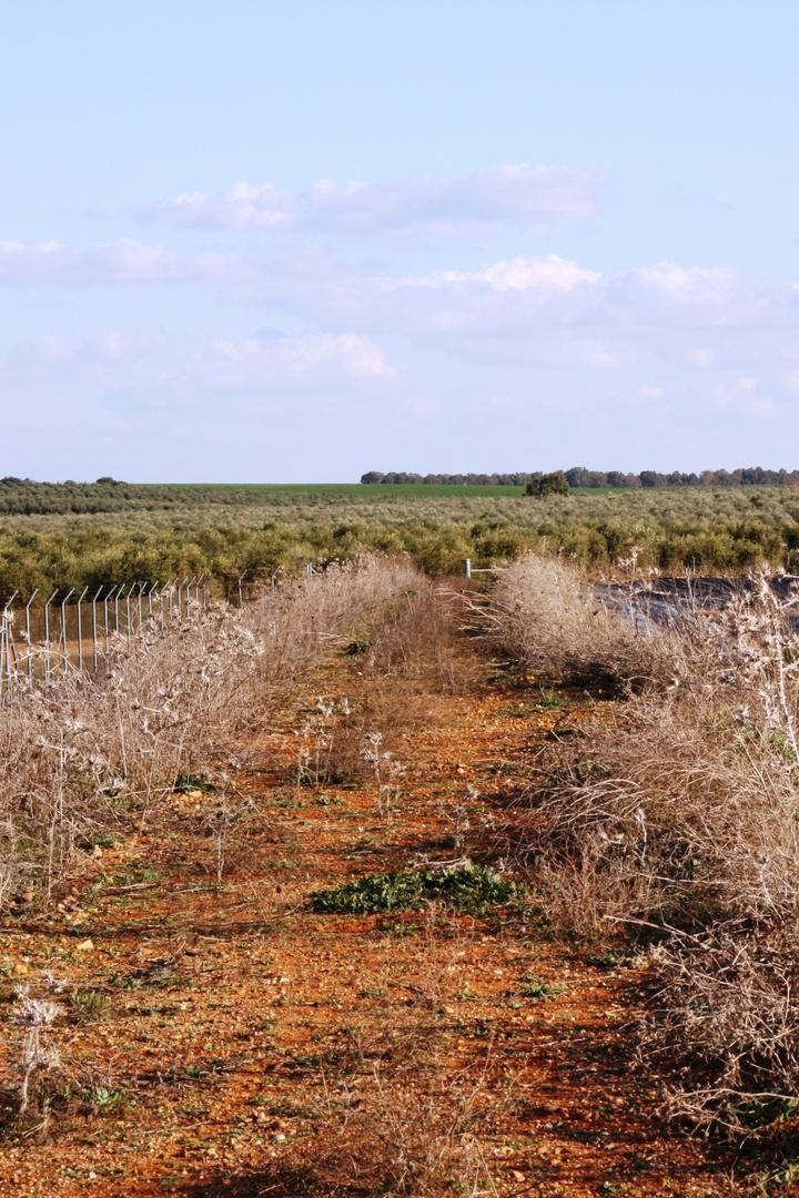 camino rural en La Campana