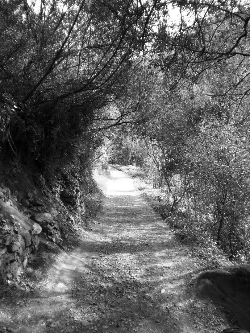 Camino sin fin