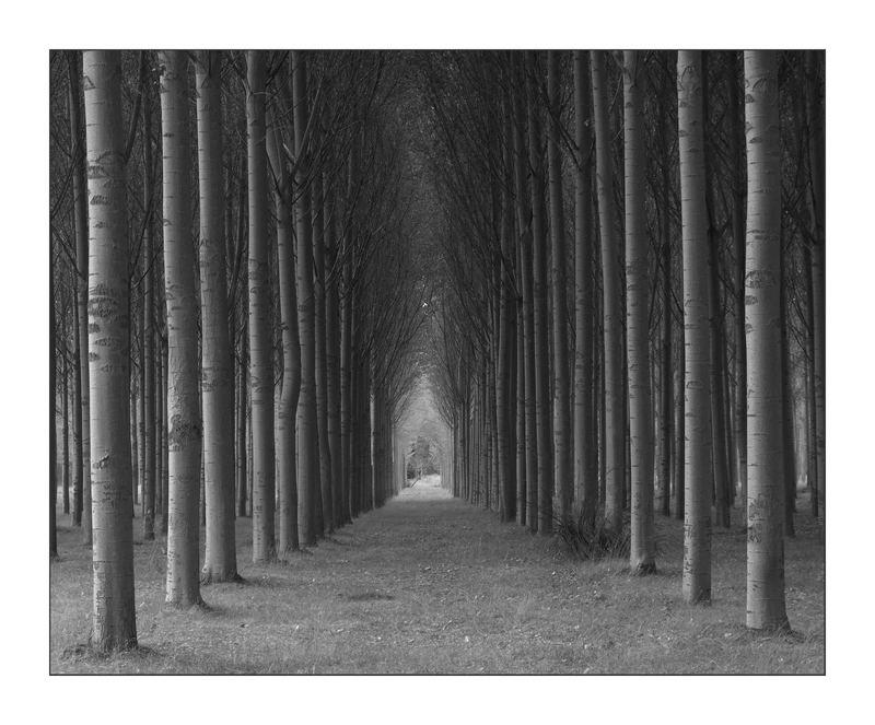 Camino sombreado