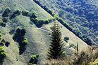 Caminos de Amagá