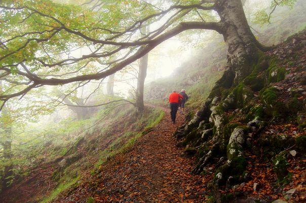 Caminos entre la niebla
