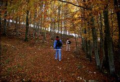 Camminando su un tappeto di foglie