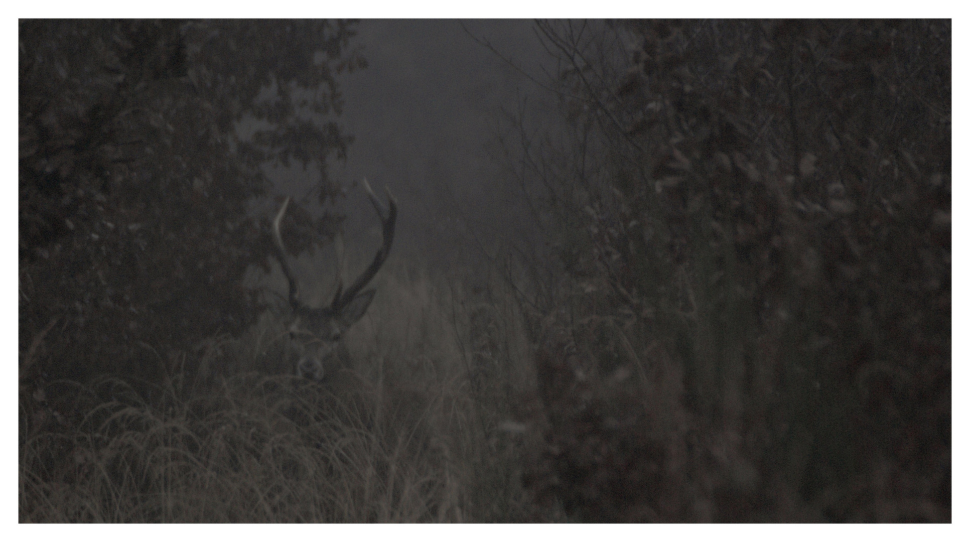 camouflé dans le brouillard.