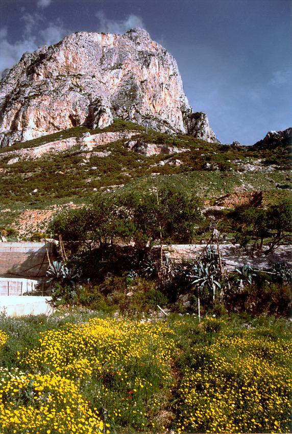 Campagna bei Punta Raisi I