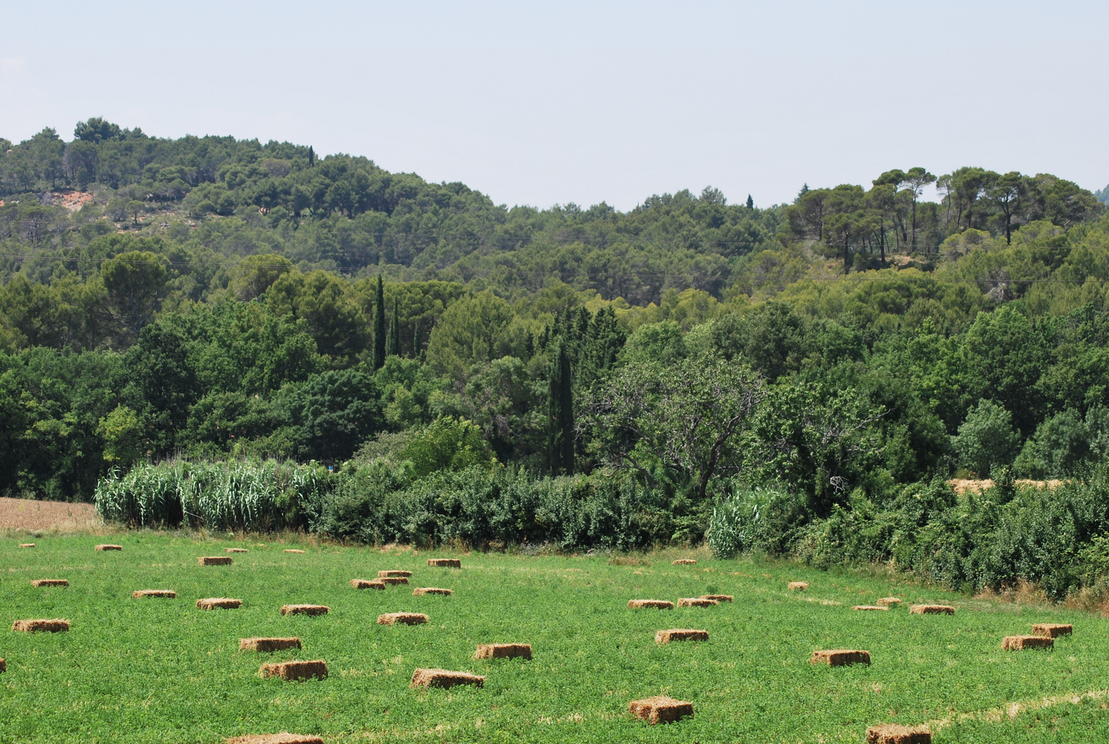 Campagne de Provence