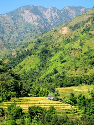 Campagnes du Népal, Terai