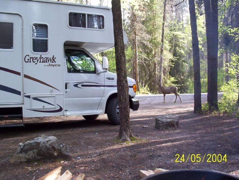Campground Waterton-Glacier NP