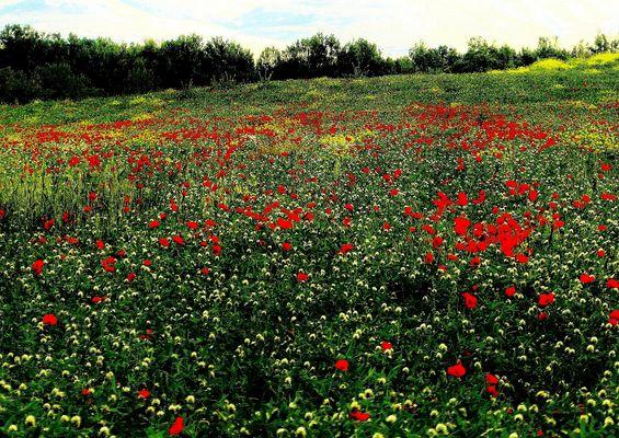 campi in primavera