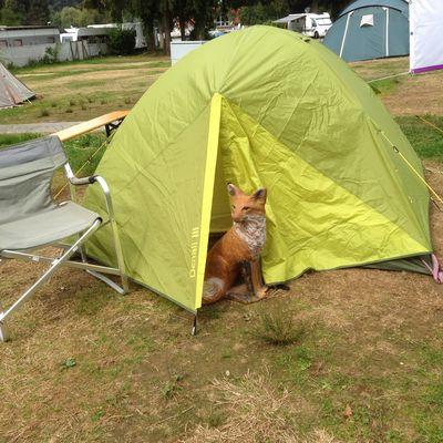 Campingidylle Nr.13 Lindau lebt 2015