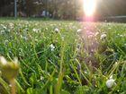 campino di primavera
