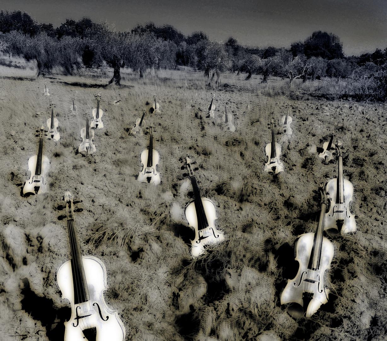 campo de violines