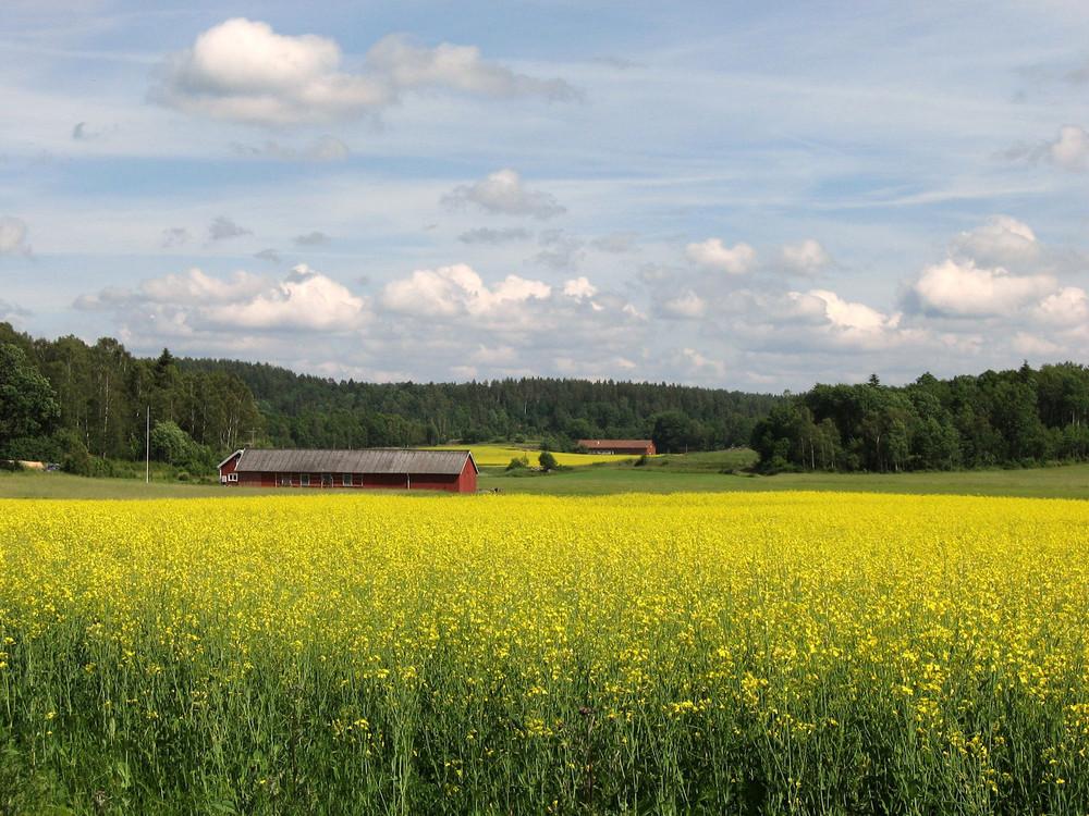 Campo di fiori Kungsbacka ( Svezia)