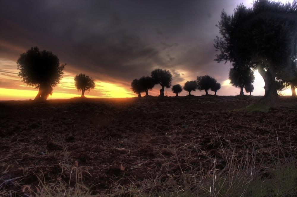 Campo no Alentejo entre Alfundao e Peroguarda