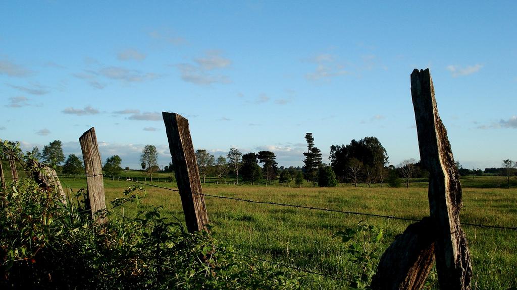 campo sureño 2