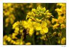 Campos amarillos (2)
