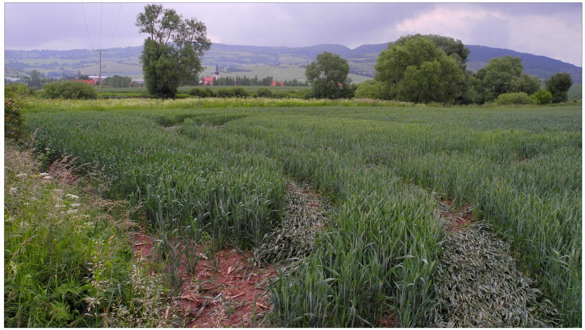 Campos cerca del lago (Felder am See)