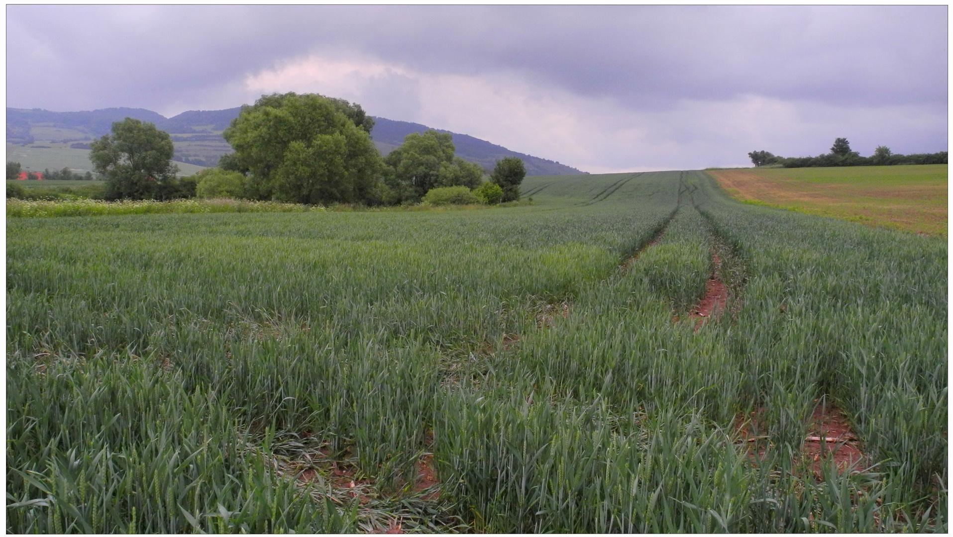 Campos cerca del lago II (Felder am See II)