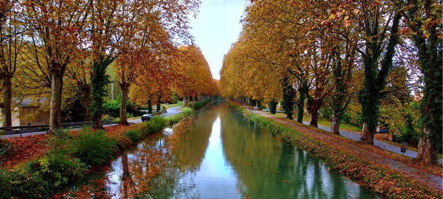 Cana du midi et couleurs d'automne