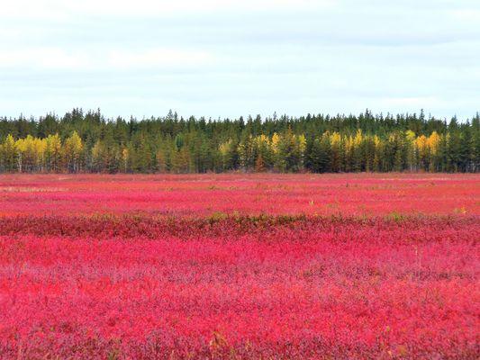 Canada couleurs d'octobre (7)
