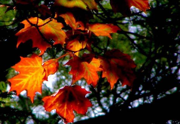 Canadas Herbst