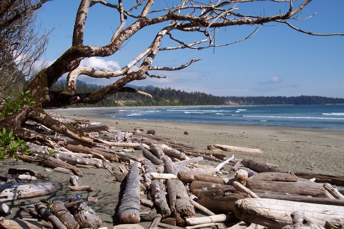 Canadian Beach Impressions