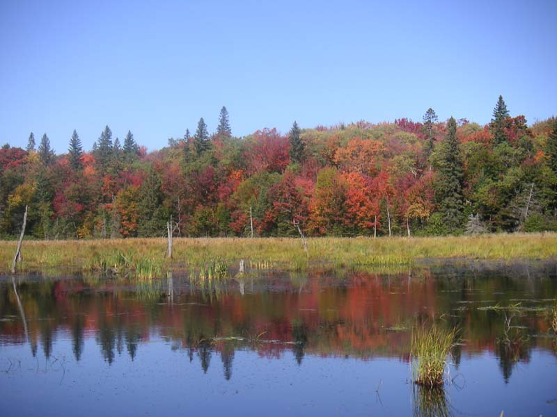 Canadian Indian Summer