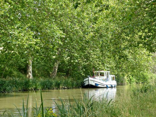 Canal du Midi, avec ses platanes été 2013