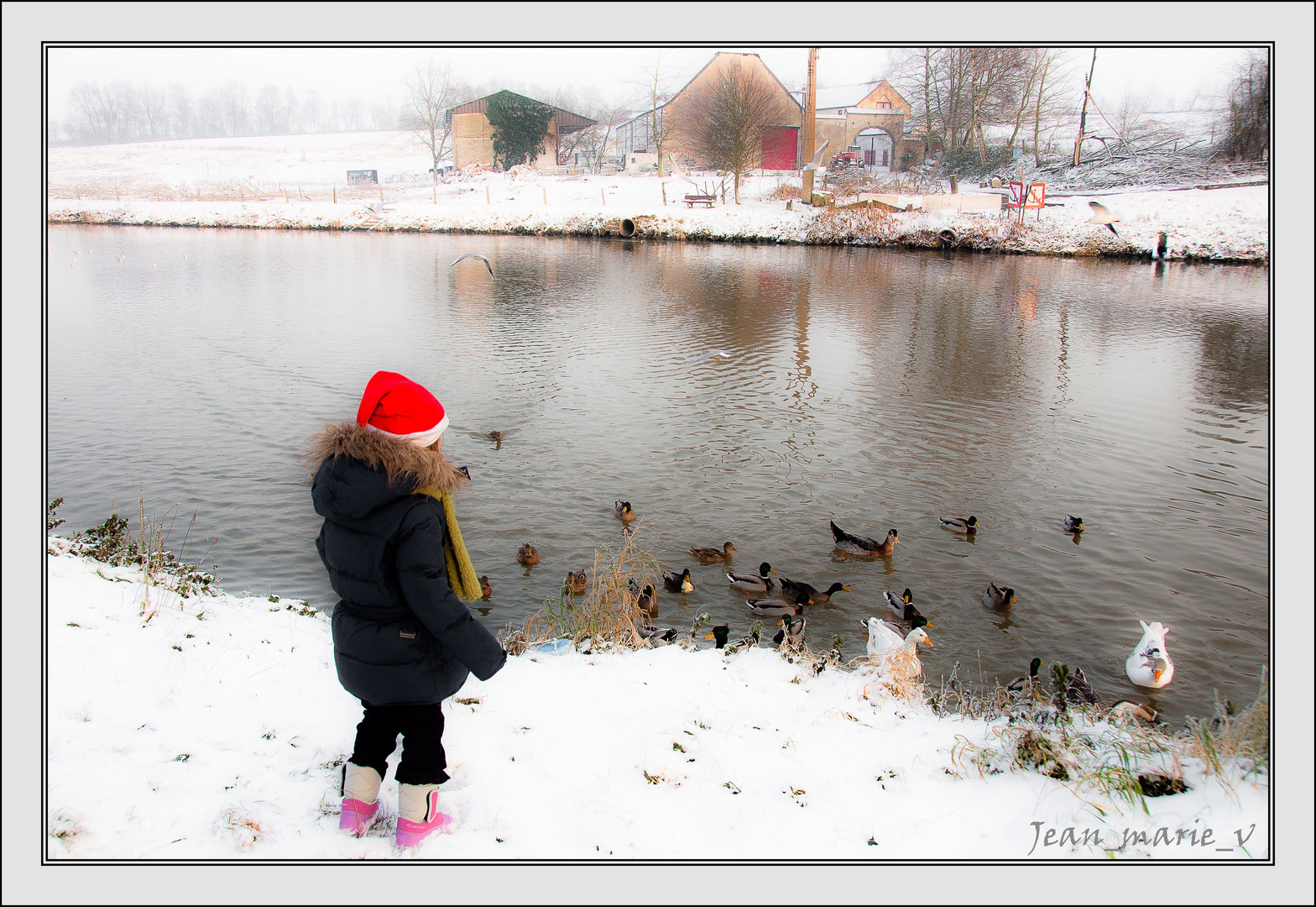 Canards en gelée