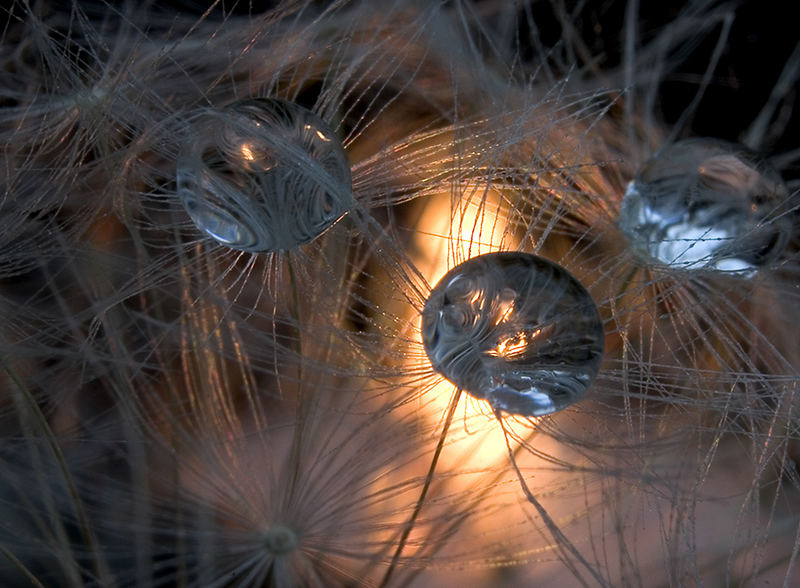 Candlelight, Dandelion and Drops