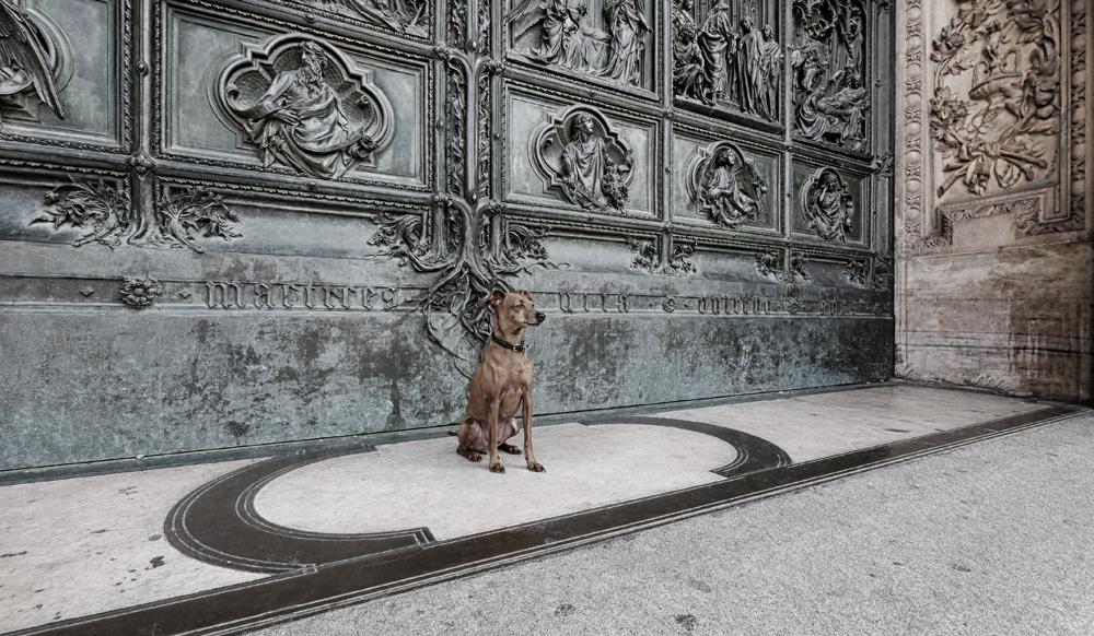 Cane da guardia ...