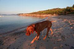 cane da spiaggia
