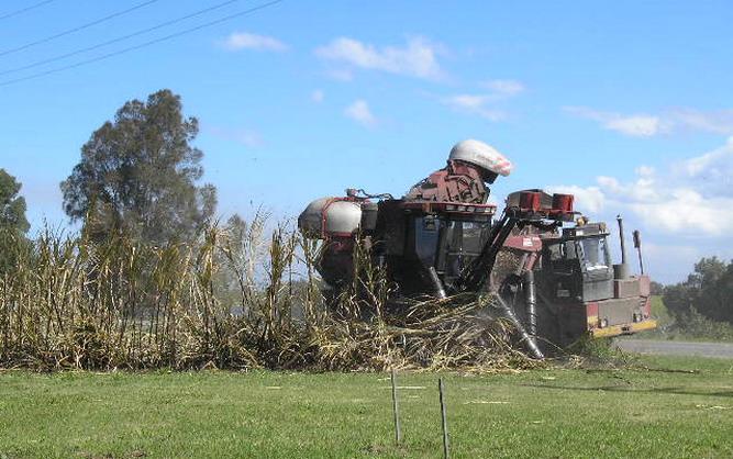 Cane Harvest 2