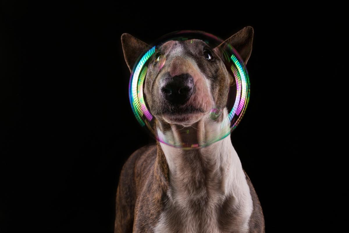 Canis Astronautus :)