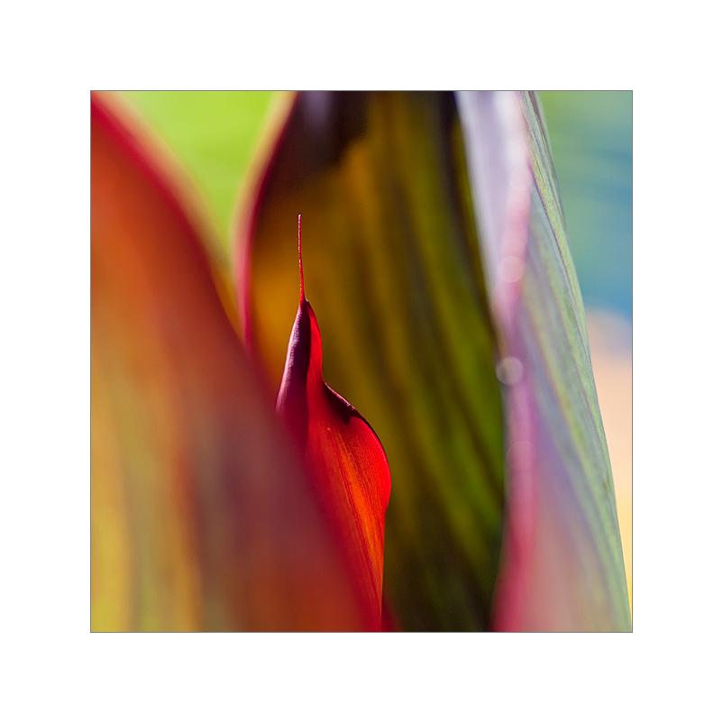 canna.colors