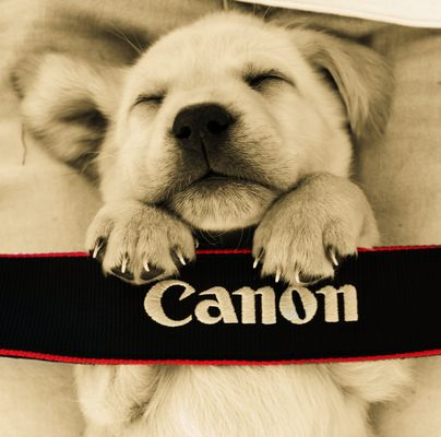 Canon entspannt