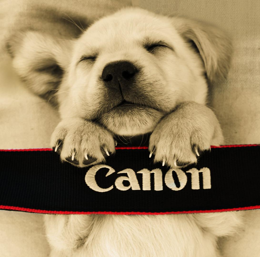 Canon ?! Find ich tierisch gut!!
