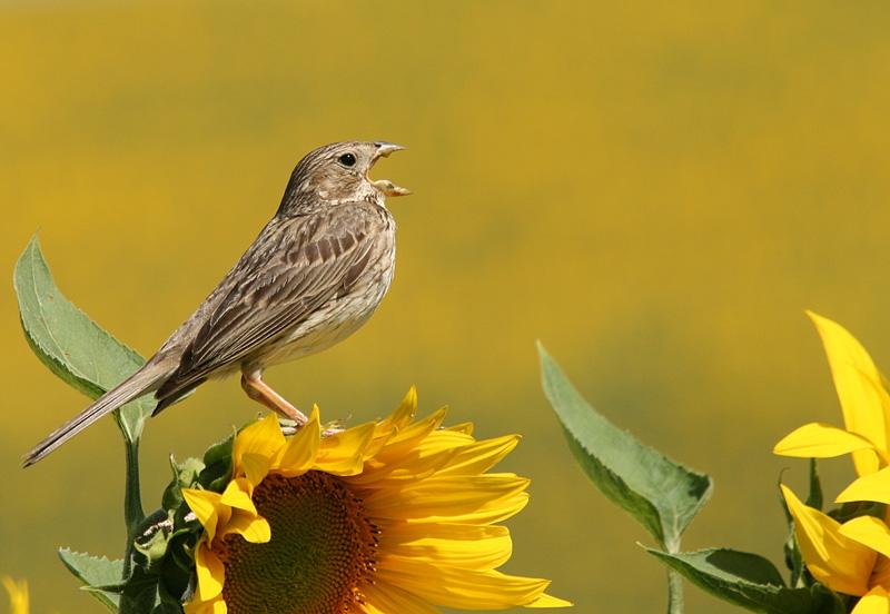 Cantando al sol
