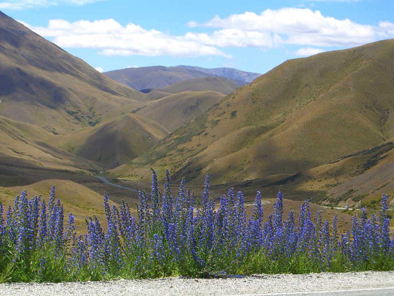 Canterbury Plains NZ